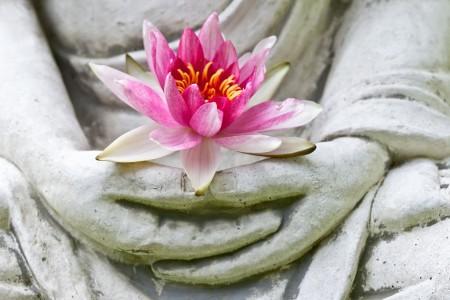 Buddha hands holding flower