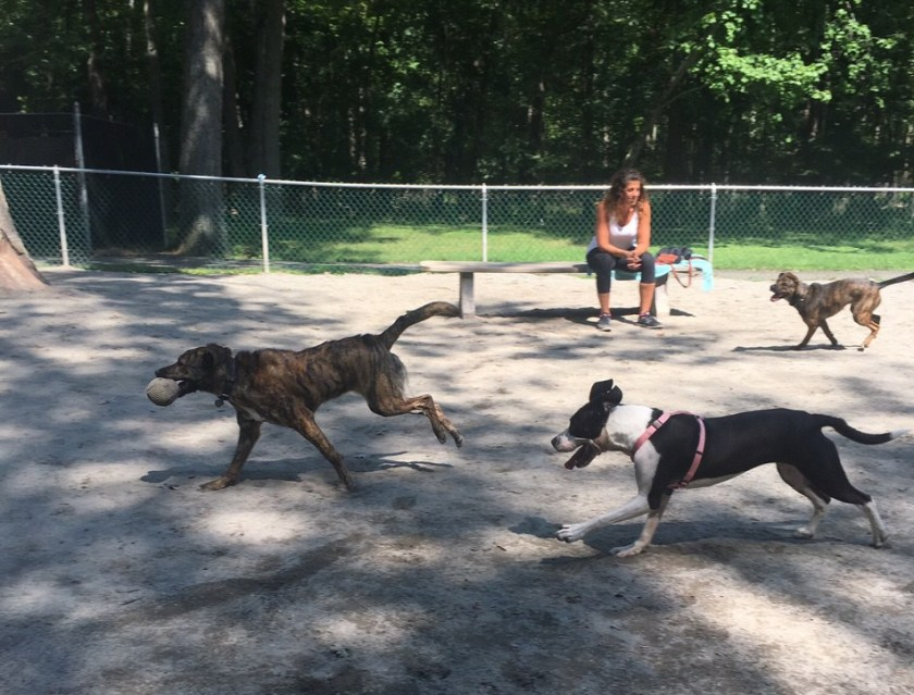 The Truth About Dog Parks