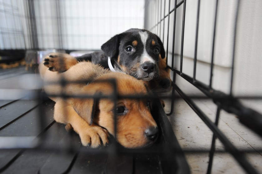 Animal Shelters, Animal rescue, animal welfare