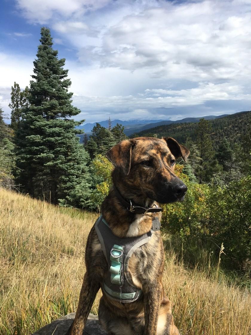 Freedom Dog