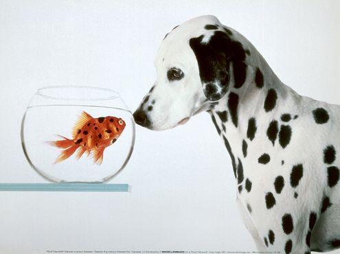 dalmatian-dog.jpg