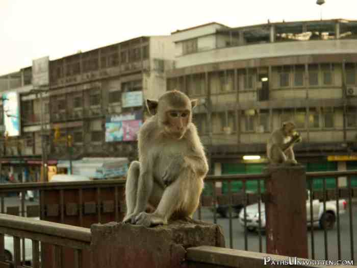 Lopburi-travel-guide-4