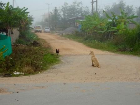 Stray dog and chicken.