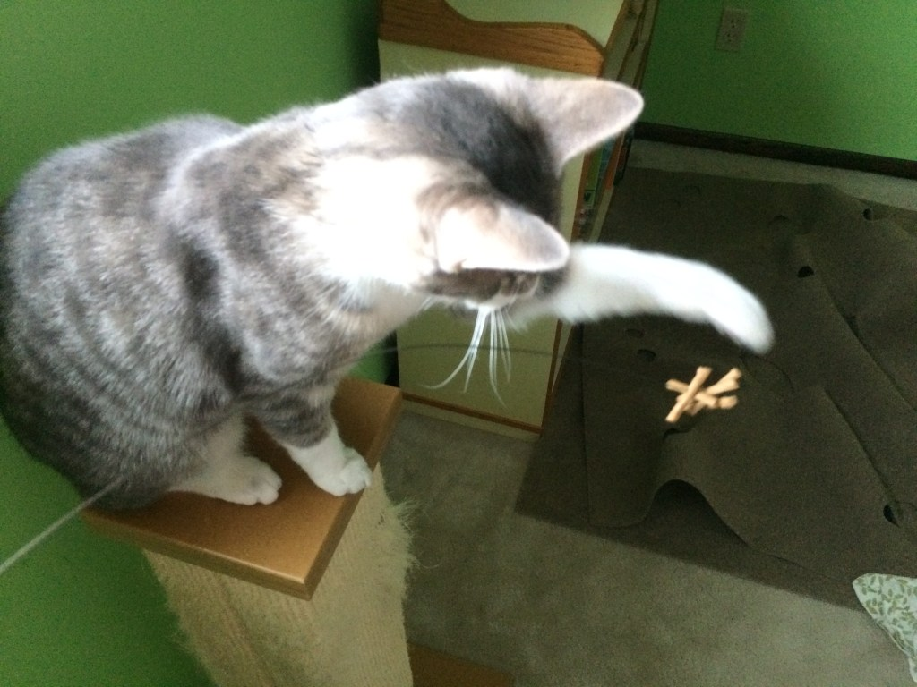 A cat is batting the toy.