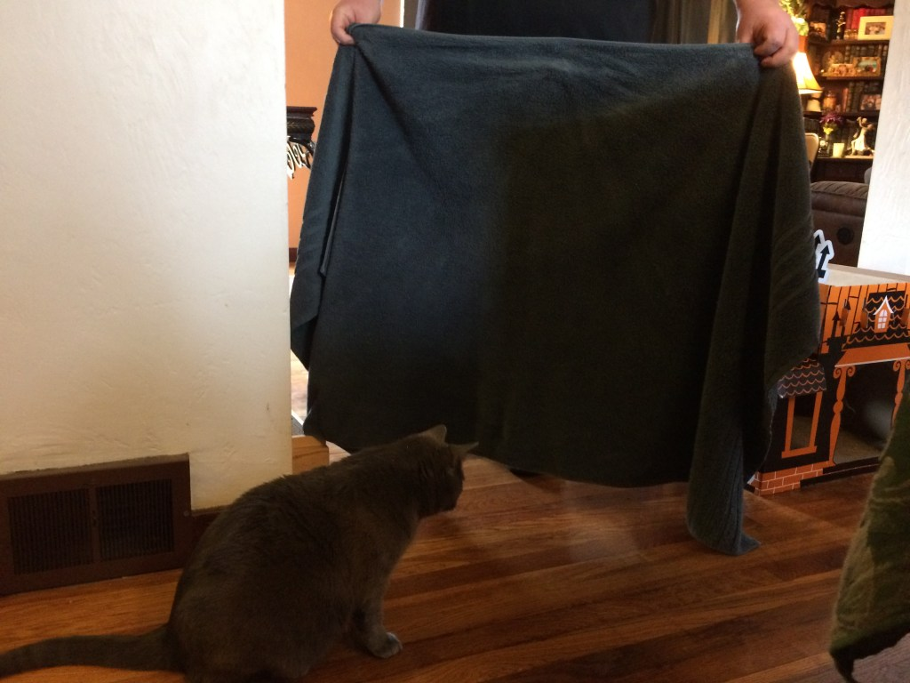 A man prevents non-recognition aggession by blocking the cats view of each other with a towel.