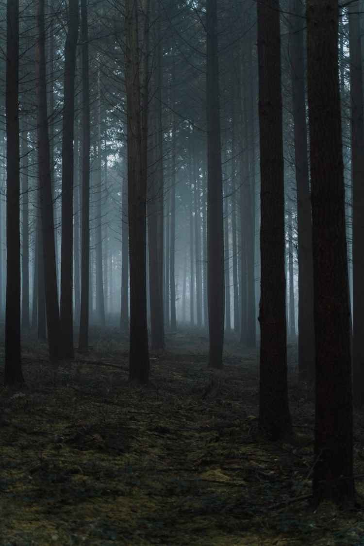 dry leafless trees in foggy woodland