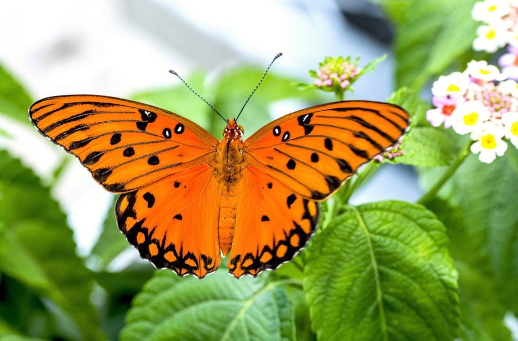 The Astonishing and Sad Reality of Butterfly Children