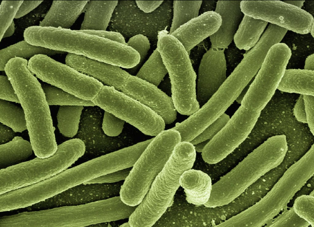 Does This Bacteria Cause Sarcoidosis?