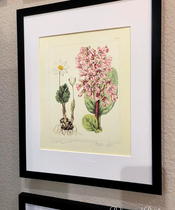 botanical print framed