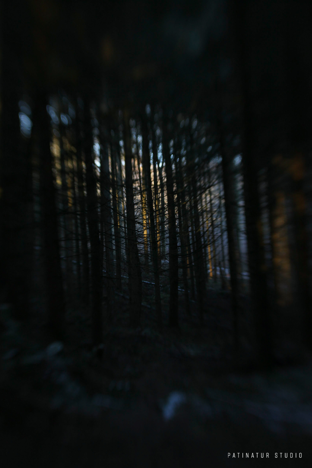 Photo art   Abstract image of a Scandinavian winter forest at sunrise
