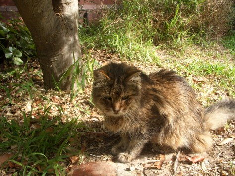 Tom the Cat local St Kilda resident who passed away at 20 years of age image by Kerrie Pacholli © pationpics.com
