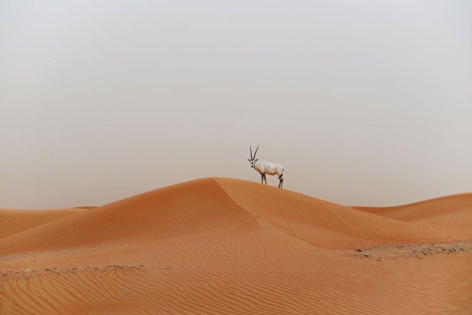 Dubai desert wüste