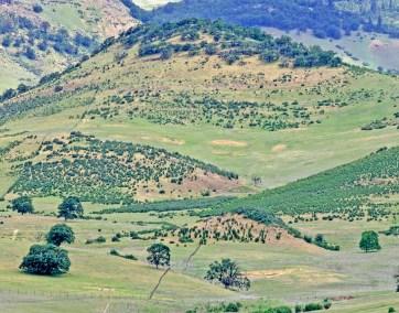 Ashland hills vista