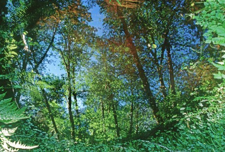 Forest Pool Hoh Rainforest copy