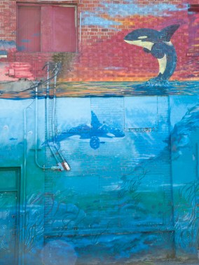 Orcas on Brick,Olympia, WA