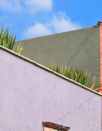 Wall and Yucca Oaxaca