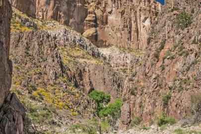 aravaipa canyon walls and cactus