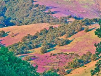 Ashland Hills in Vetch