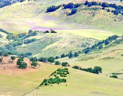 Ashland Hills, Vetch with Fenceline