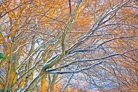 Images of Trees