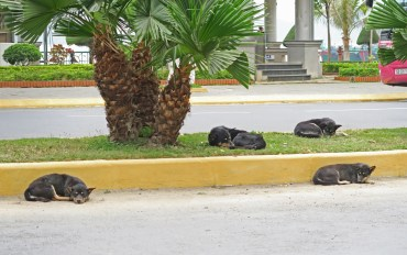 Dogs Relaxing in CatBa