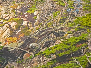 Monterey point lobos snag abstract