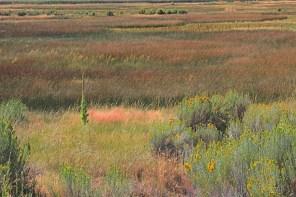 Willow Creek refuge CA mulien meadow