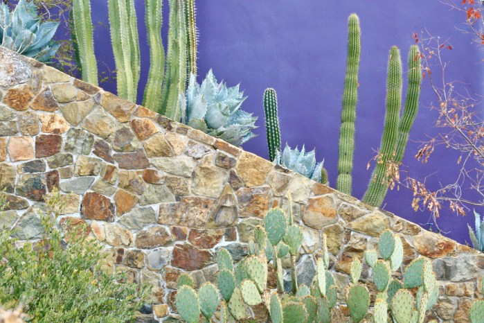 az suajaro desert museum