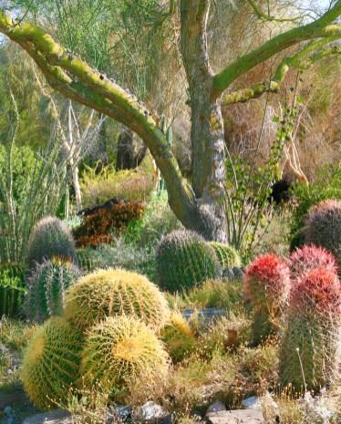 cactus and tree living desert