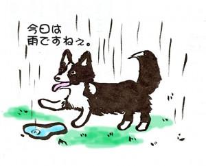 今日は雨ですね!