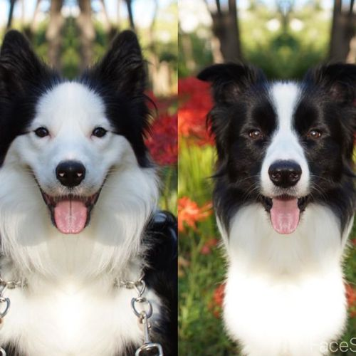 顔の対称性を見るアプリでパクチーをやってみた。ハーフフェイスは全然違う顔になっちゃいますね。黒い方は、兄弟に似てるかも。#facesym