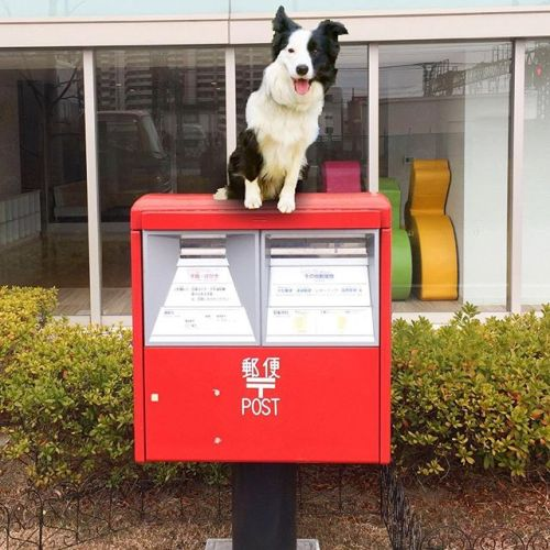 良い子のみんなは真似しちゃダメだよ。#ノリノリ犬 #dogontop #onthetop ※これは合成写真です。