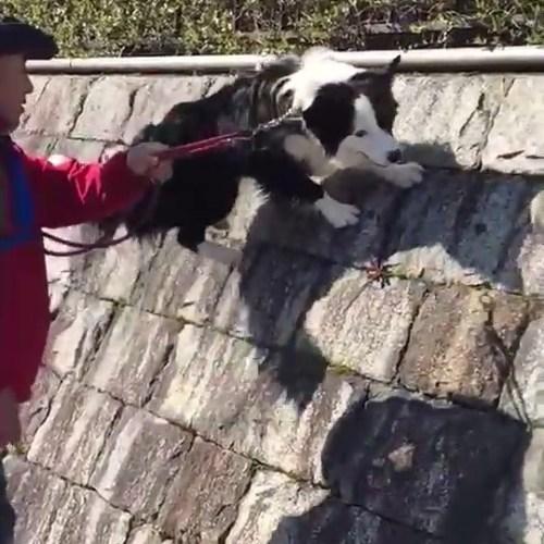 忍法、壁走り!やれるかなぁと思ったらやれました。