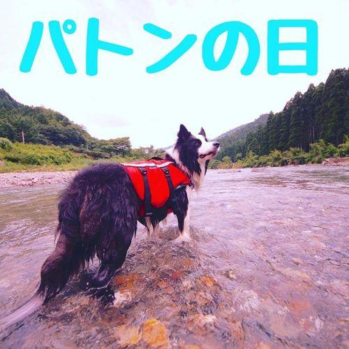 8/10は我が家ではパトンの日。川遊び大好きだったパトン、今でも最高の相棒だよ!