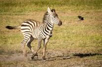 Jeu d'enfants, Parc d'Amboseli, Kenya