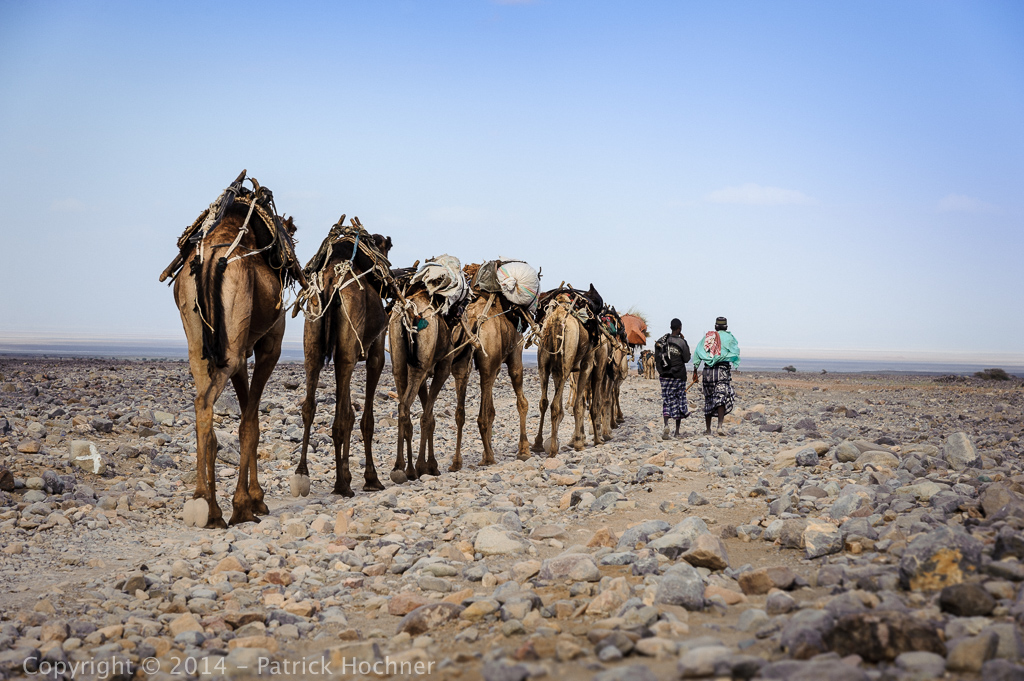 Salt caravans of the Danakil Depression, Ethiopia