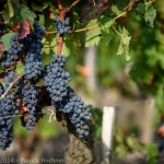 Discovering Bordeaux, France