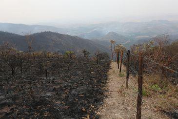 Brasília - Incêndio destrói cerrado na região do Lago Oeste, no Distrito Federal (Fabio Rodrigues Pozzebom/Agência Brasil)