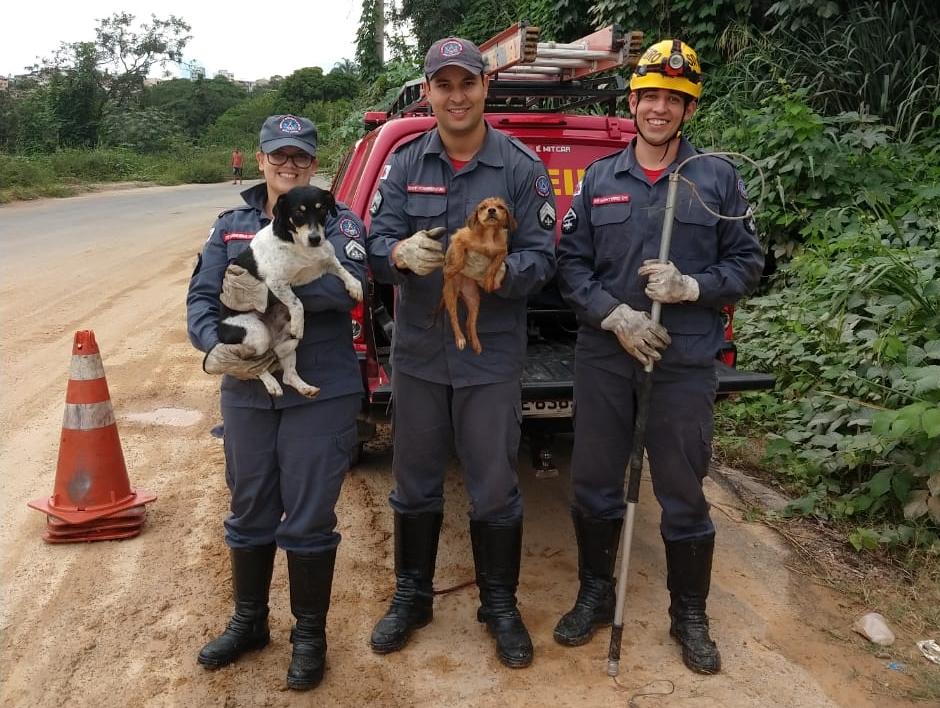 Cachorro acalma filhote durante resgate em Divinópolis-MG