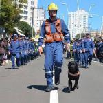 Cão Barney Corpo de Bombeiros Santa Catarina Brumadinho