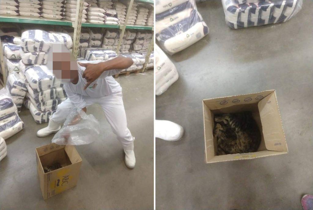 Internautas denunciam suposta matança de gatos em atacadista