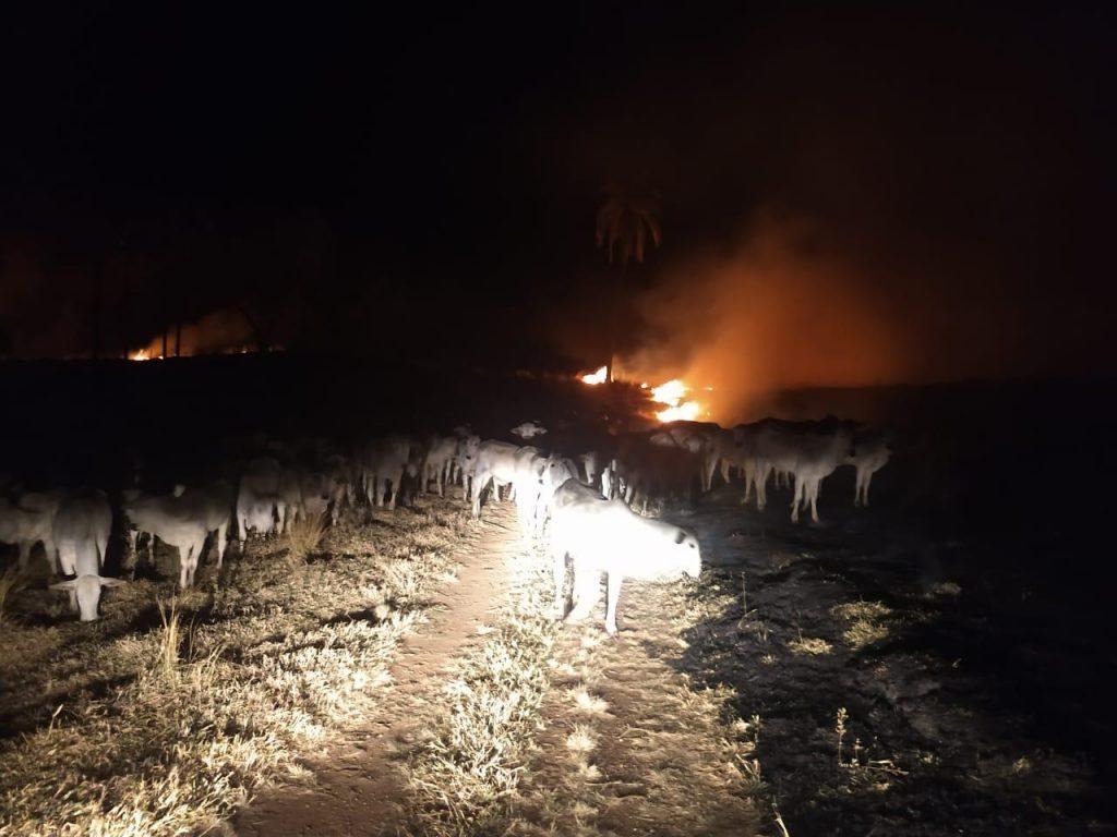 Incêndio de grandes proporções atinge vegetação em Uberaba