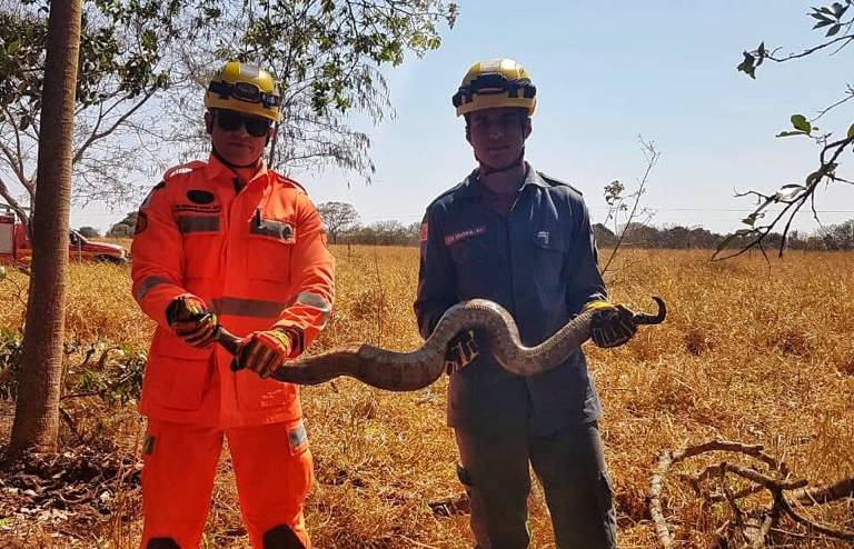 Jiboia de dois metros é capturada em Ituiutaba