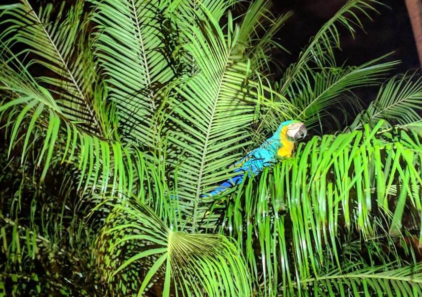 Arara fica presa em árvore e é resgatada pelo Corpo de Bombeiros