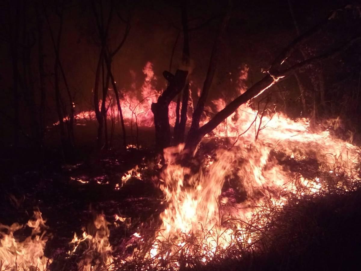 Ocorrências de queimadas crescem 31% em Minas Gerais
