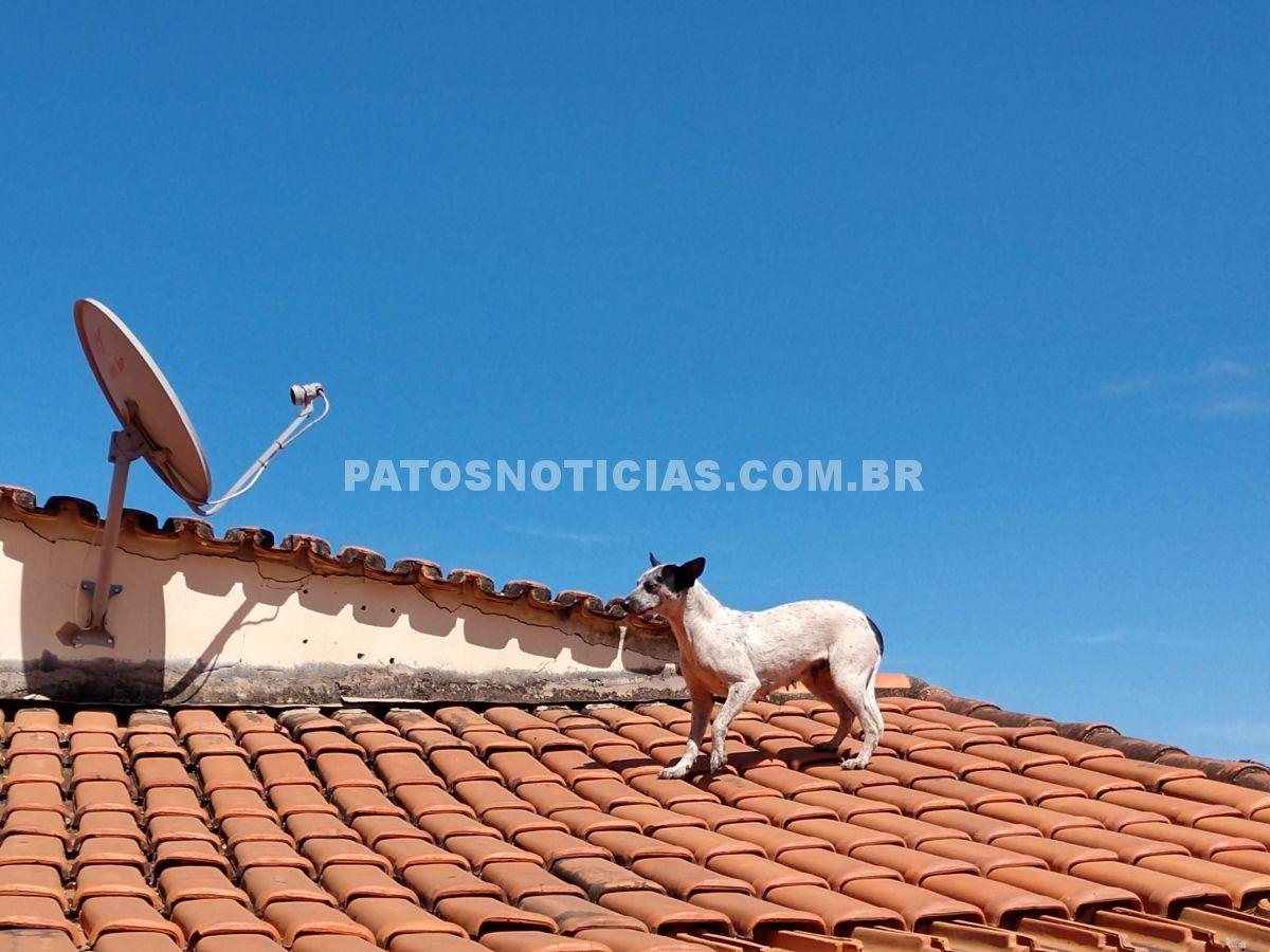Cachorro no telhado - Patos de Minas