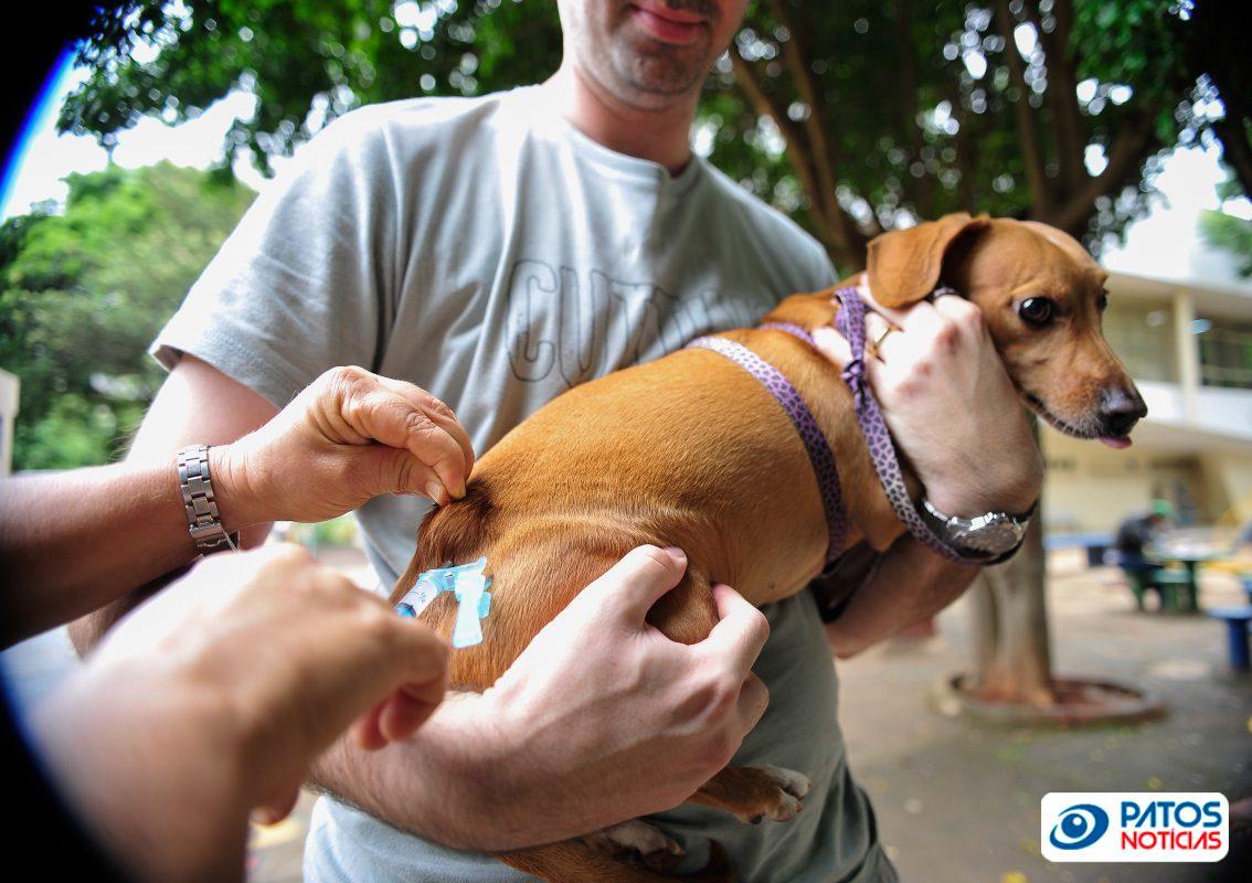 vacina contra a raiva - cão