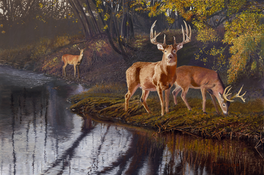 Autumn Treasures Whitetail Oil Painting By Pat Pauley