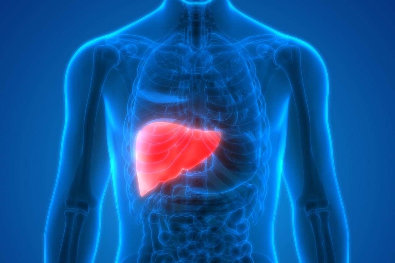 Nichtalkoholische Fettleber (NAFLD): Kann Zimt die Leber schützen?