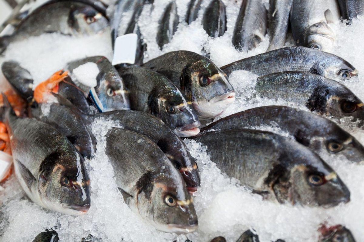 Schadstoffbelastung in Fischen & Meerestieren: Quecksilber, PCBs, Dioxine & DDT